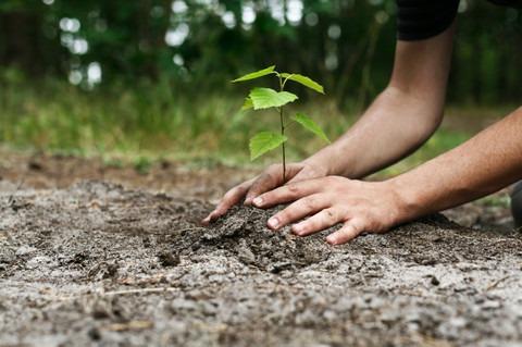 Plantará Ecología y escuelas cien  árboles en distintas vialidades