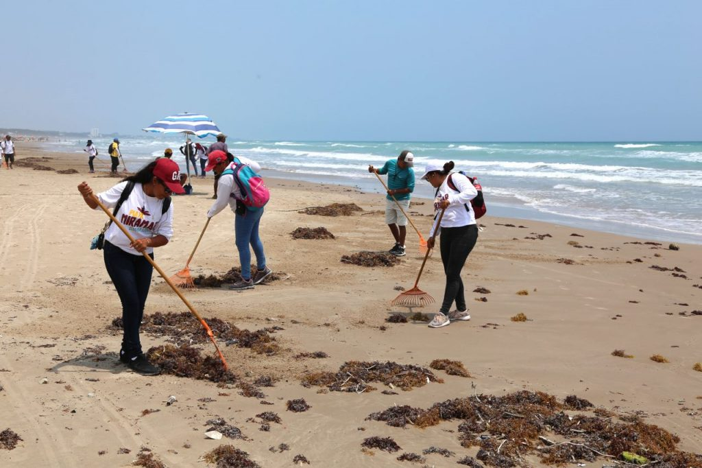 Gobierno de Madero retira sargazo de playa Miramar