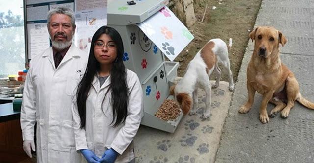 Desarrollan croquetas anticonceptivas para perros callejeros