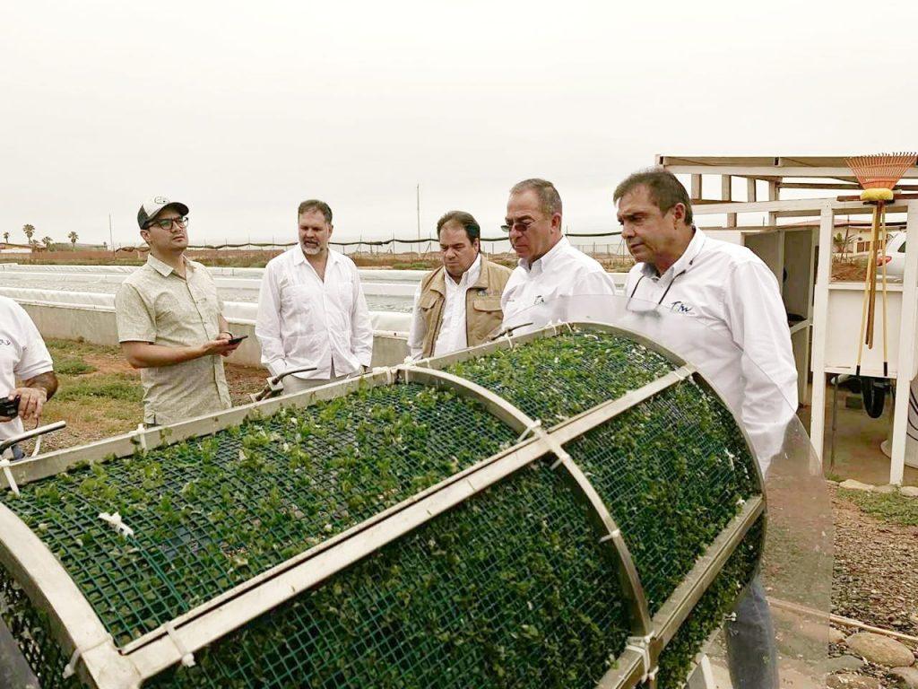En Tamaulipas van por mayor cultivo en granjas acuícolas