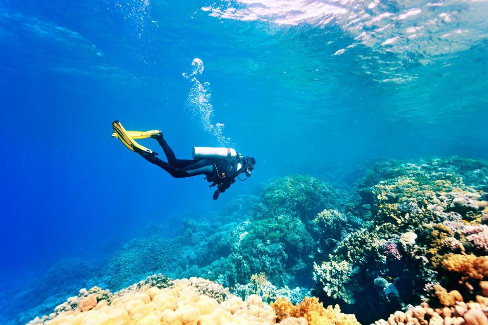 Descubren investigadores cinco nuevos arrecifes en el Golfo de México