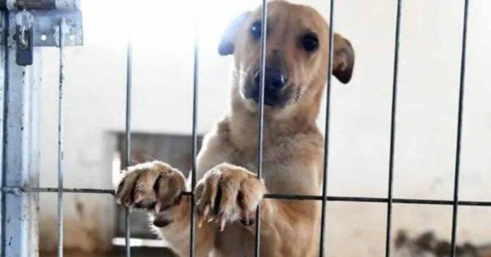 Aumentan denuncias por casos de maltrato animal