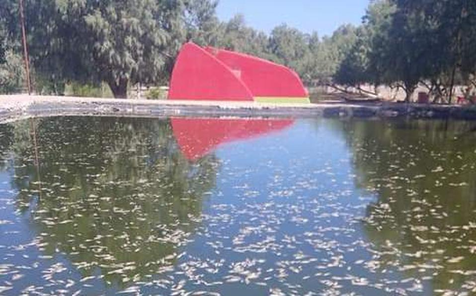 Miles de pesces envenenados en parque de Coahuila