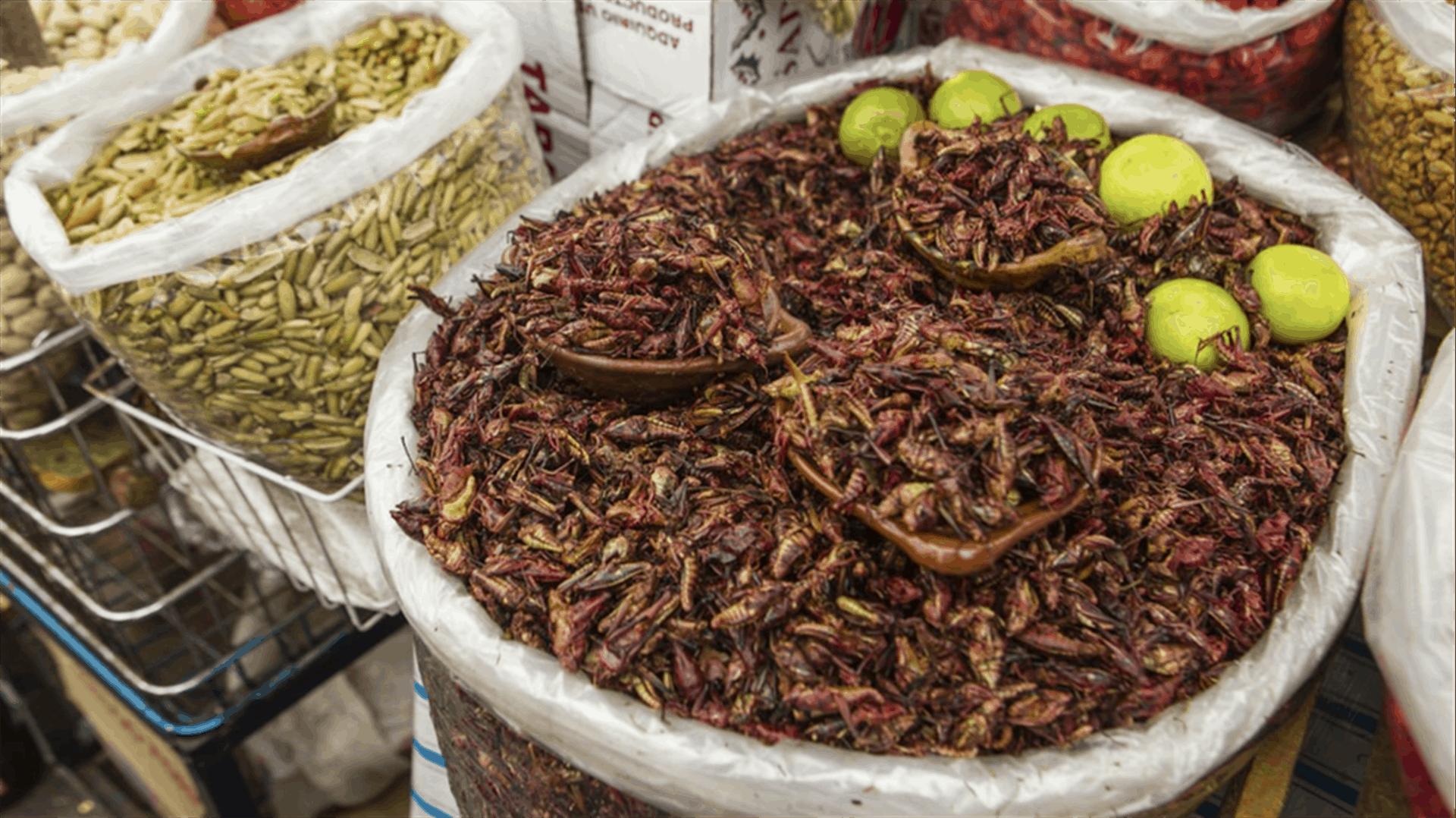Consumo irresponsable provocaría extinción de insectos