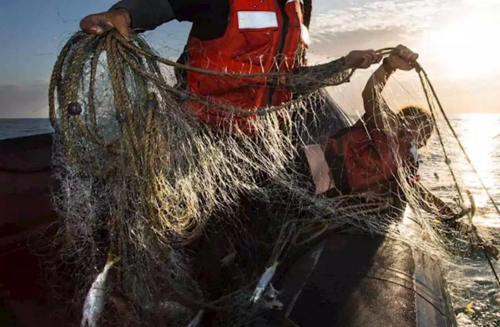 Retiran de Golfo de California red gigante que dañaría a vaquita marina
