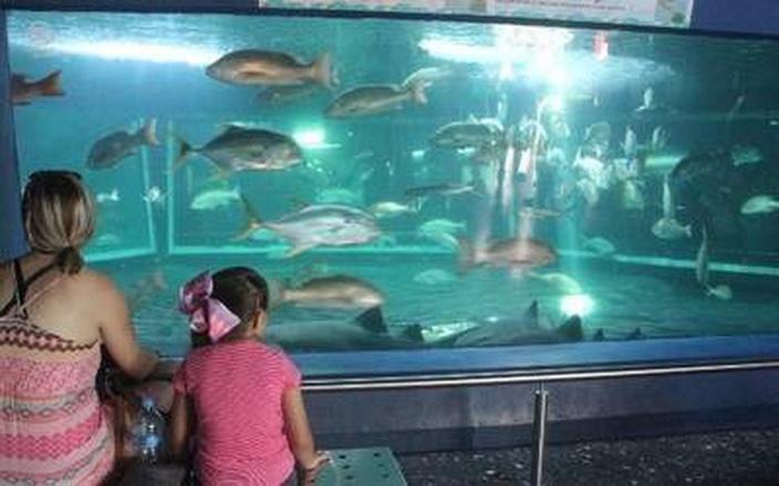 Anuncia Chucho Nader acuario para Tampico; obra arrancaría en enero