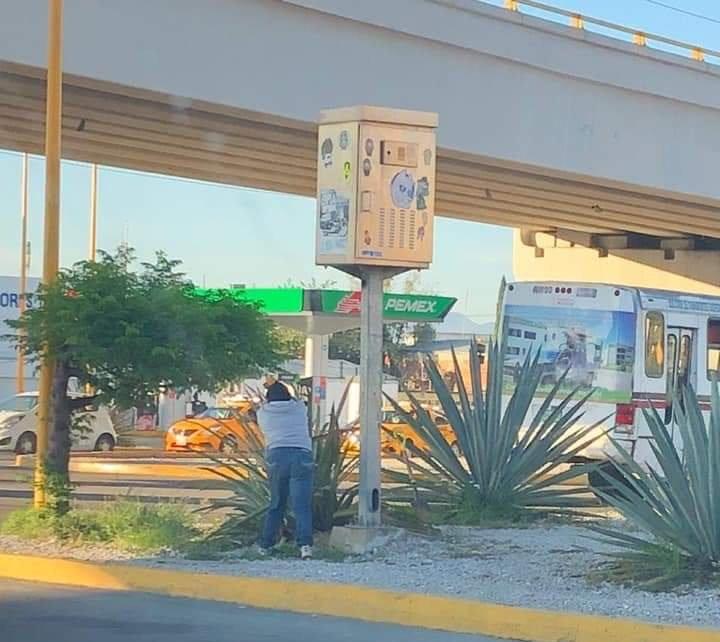 Captan en redes a conductor que se roba una planta de maguey en Oaxaca