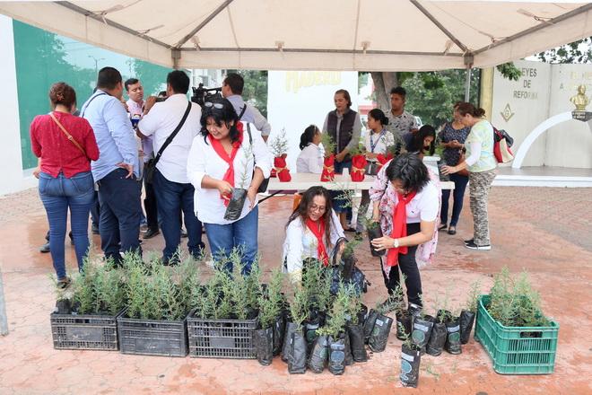 Fomenta Gobierno Municipal la reforestación en Ciudad Madero