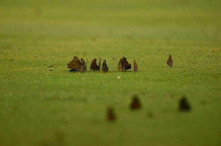 Ante el cambio climático, las polillas reducen su tamaño