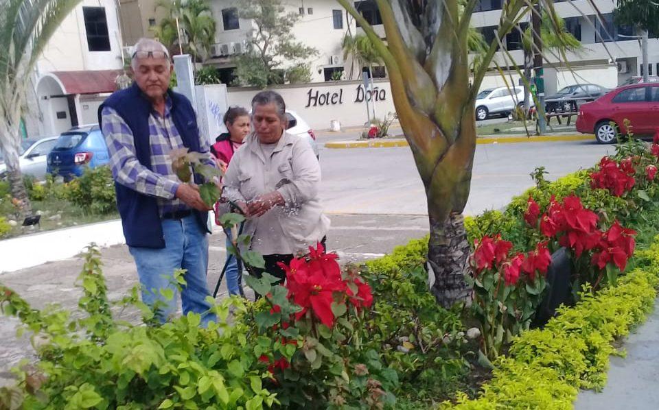 Colocan Nochebuenas en avenidas de Ciudad Madero