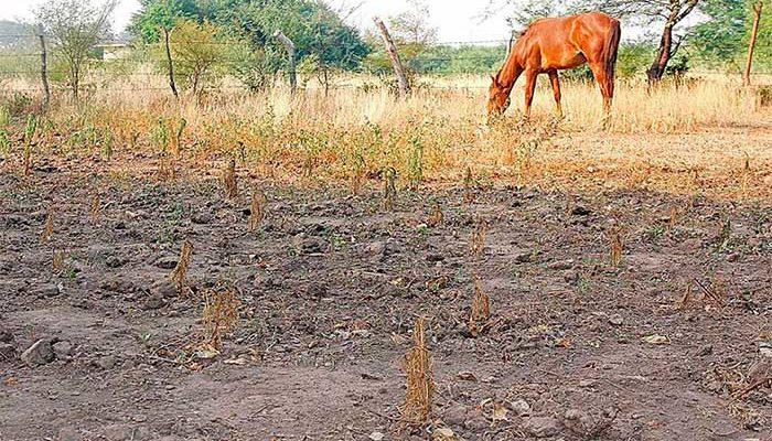 Monitorean sequía y afectaciones al sector agropecuario de México