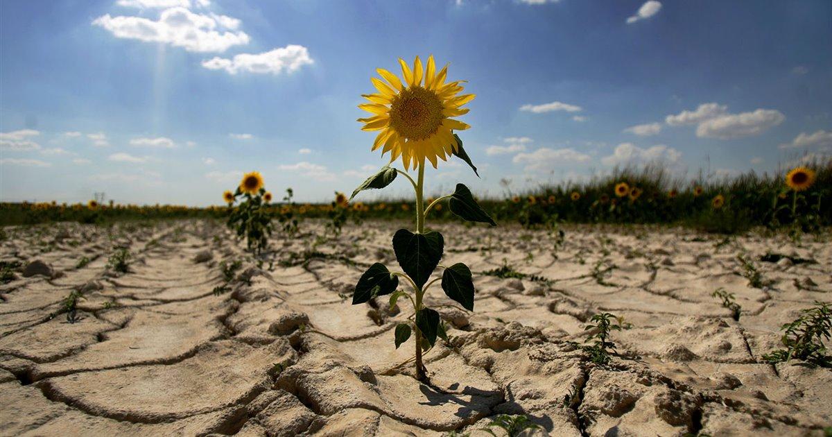 Hacen frente al cambio climático con vegetación