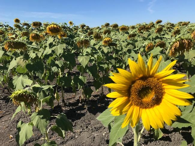 David Ed Castellanos | Llegó el tiempo de la cosecha